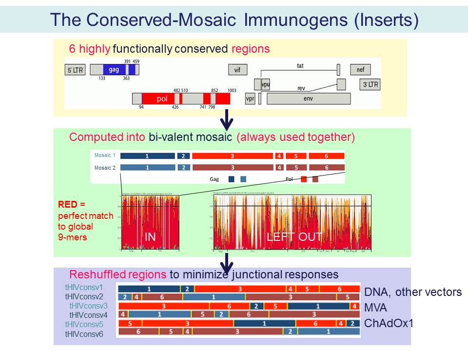 The Conserved-Mosaic Immunogens (Inserts)