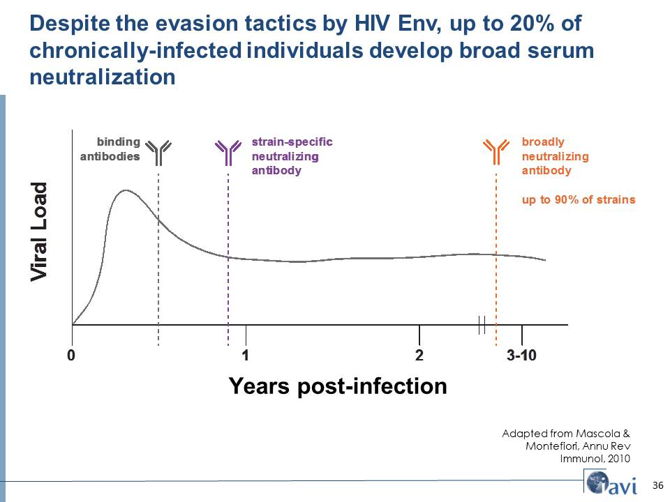 Despite the evasion tactics by HIV Env, up to 20% of chronically-infected individuals develop broad serum neutralization