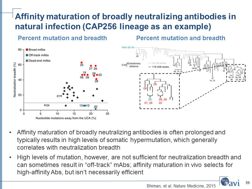 Affinity maturation of broadly neutralizing antibodies in natural infection (CAP256 lineage as an example)