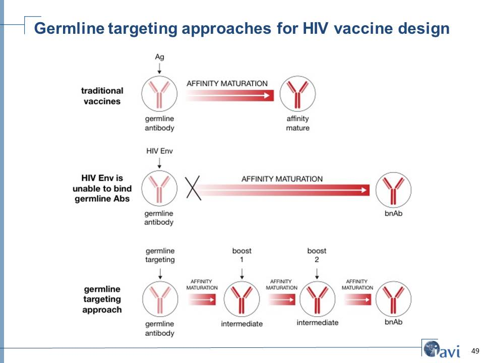 Germline targeting approaches for HIV vaccine design