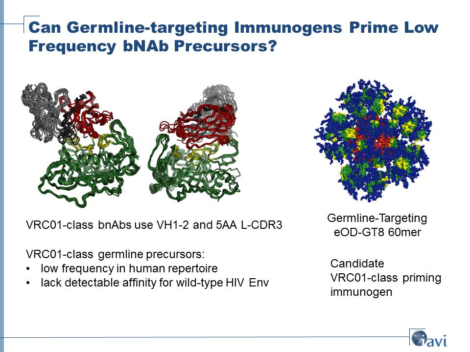 Can Germline-targeting Immunogens Prime Low Frequency bNAb Precursors?
