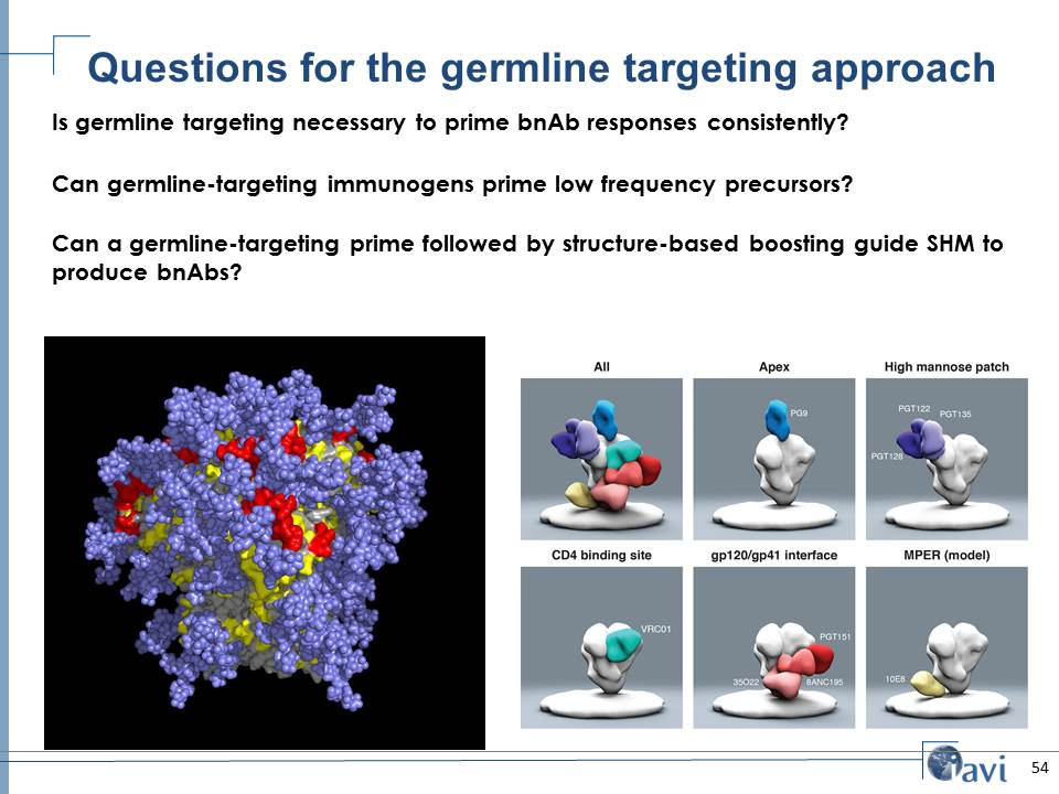 Questions for the germline targeting approach