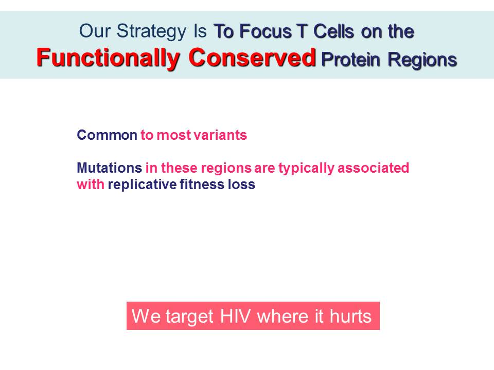 Our Strategy Is To Focus T Cells on the Functionally Conserved Protein Regions